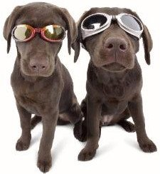 dogs in doggles