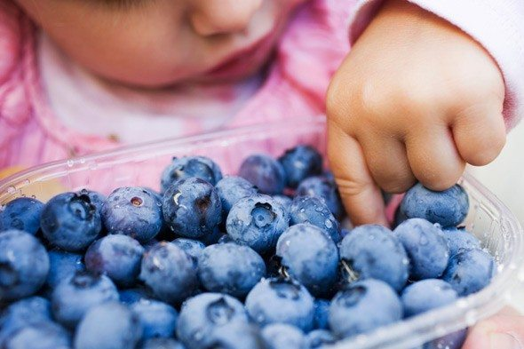 child-eating-blueberries-al