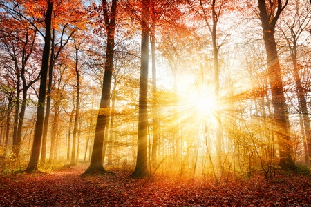How Does Sunlight Damage Our Eyes?